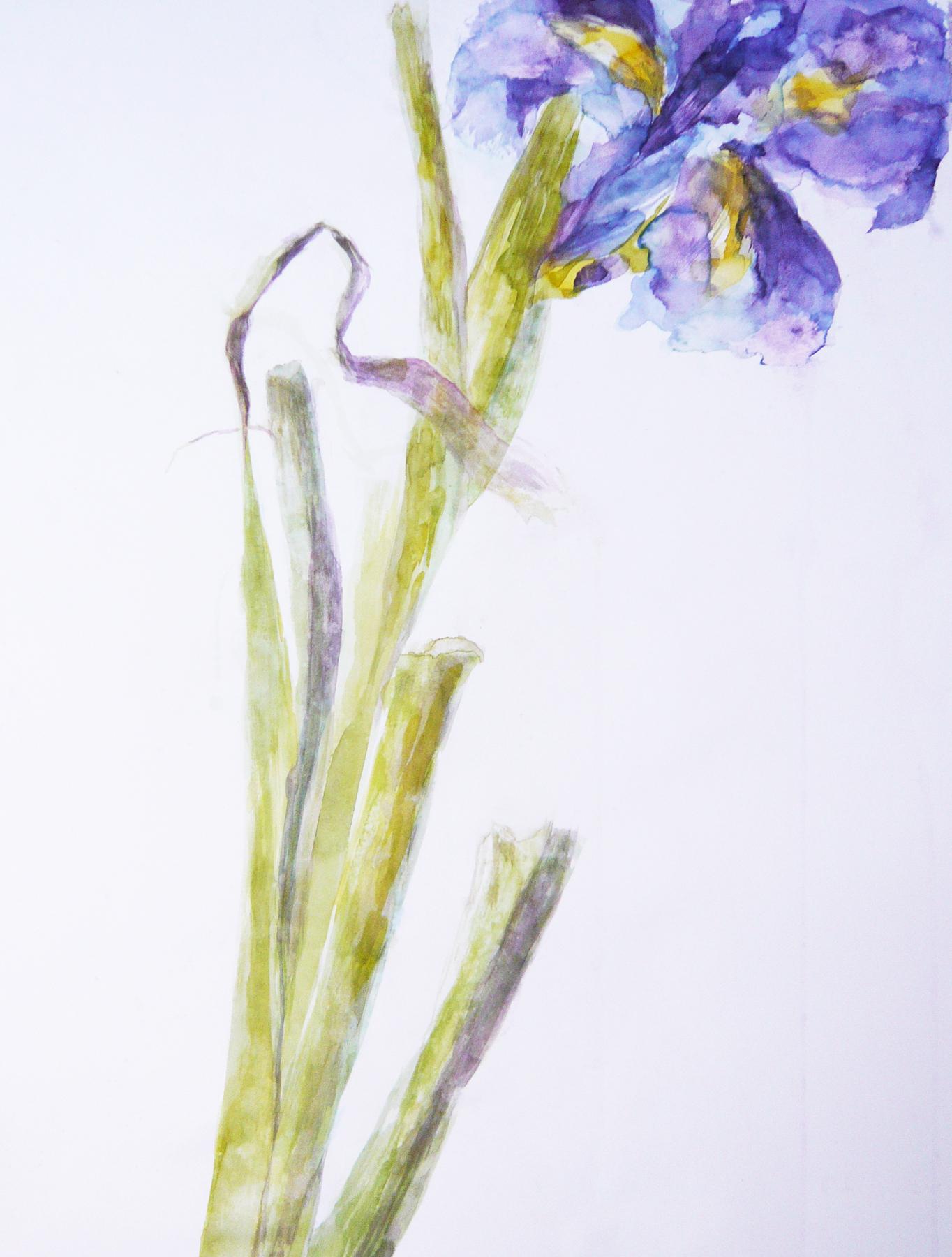 Poems & Plants Iris Full