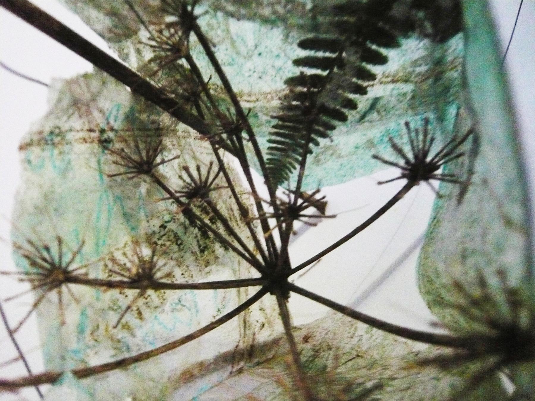 Poems & Plants - Weedling Wild - inside