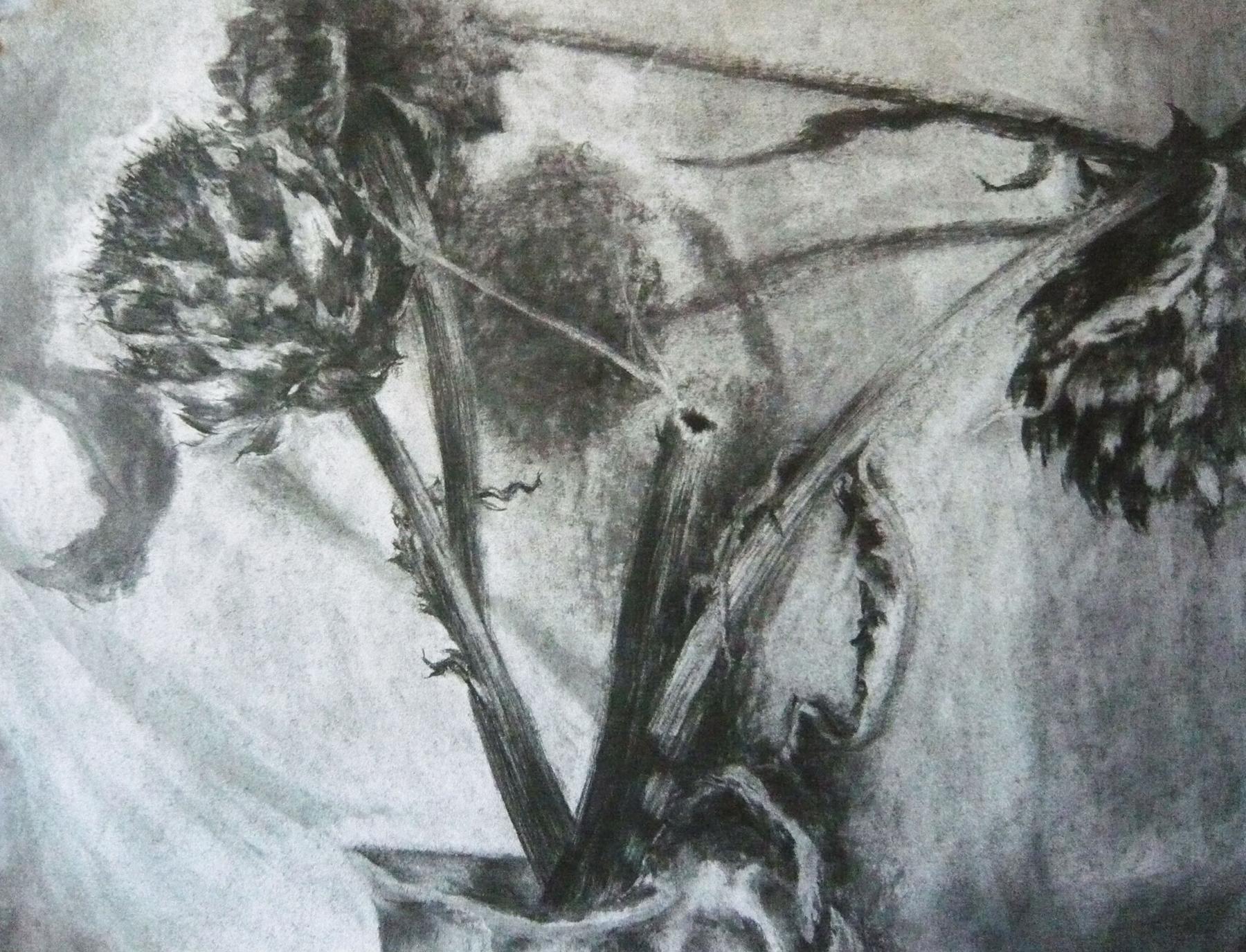 Poems & Plants Artichokes Charcoal