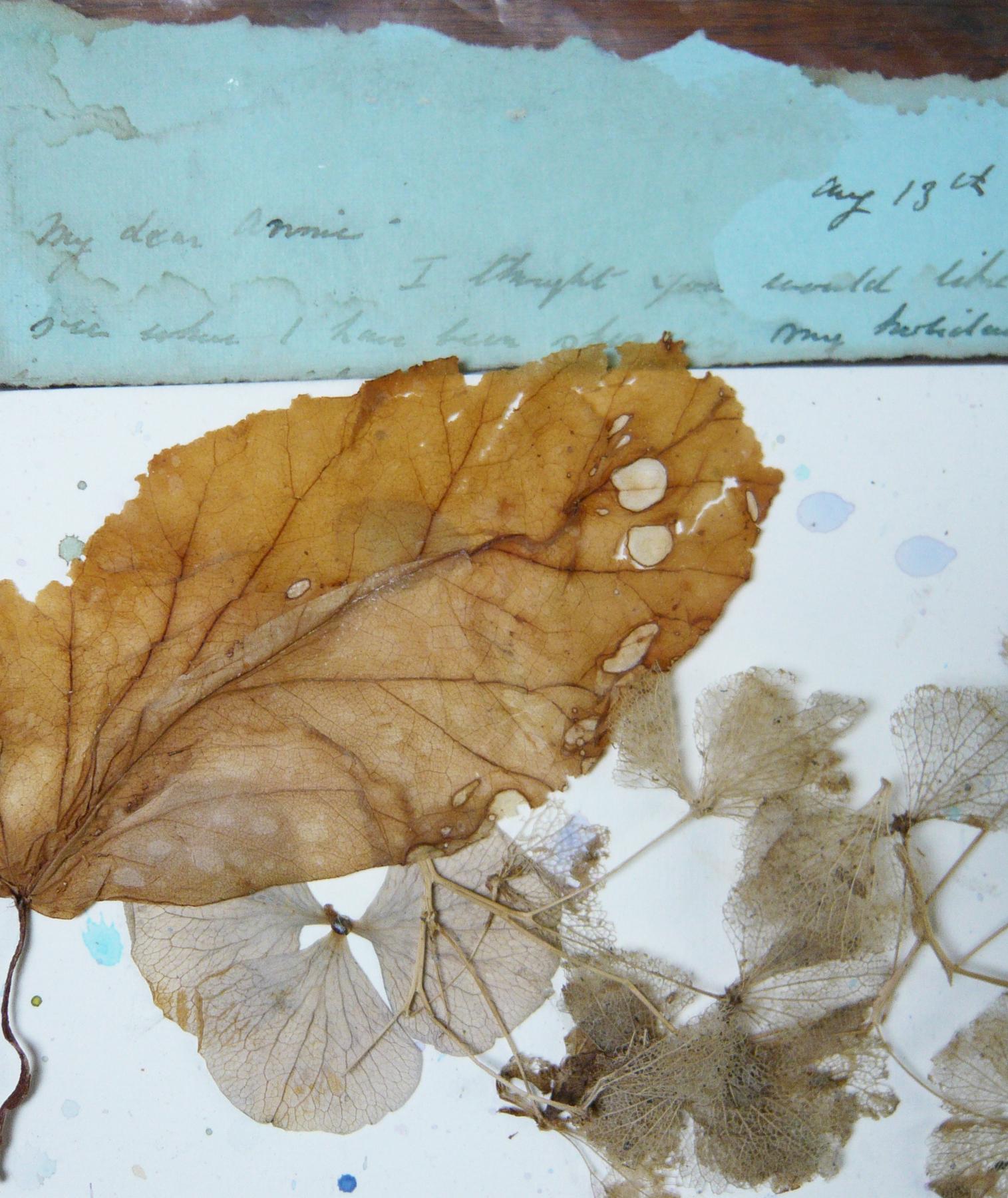 Poems & Plants Hydrangea Letter